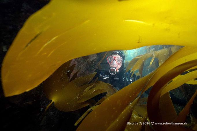 Sven im Kelp © Robert Hansen