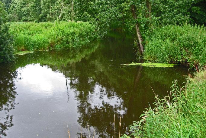 Quell-Kolk, fotografiert vom linksseitigen Ufer, Blickrichtung NO (19.7.12)