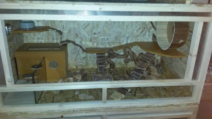 Eines unserer 120x60x60 cm (LxBxH) Terrarien für Zuchtpaare mit Frontbelüftung