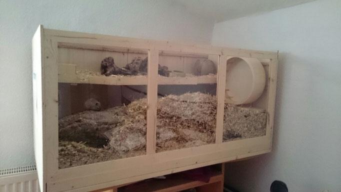 Terrarium von Milky, Helena und Fumiko mit den Maßen 115x60,5x58 cm (LxBxH). Belüftungsgitter am Deckel.