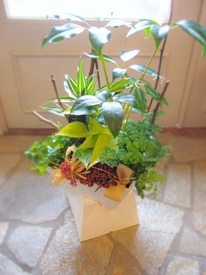 観葉植物に、花ののぐちオリジナル装飾を♪