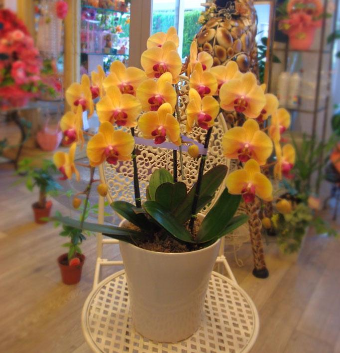 黄色の胡蝶蘭 ミニ