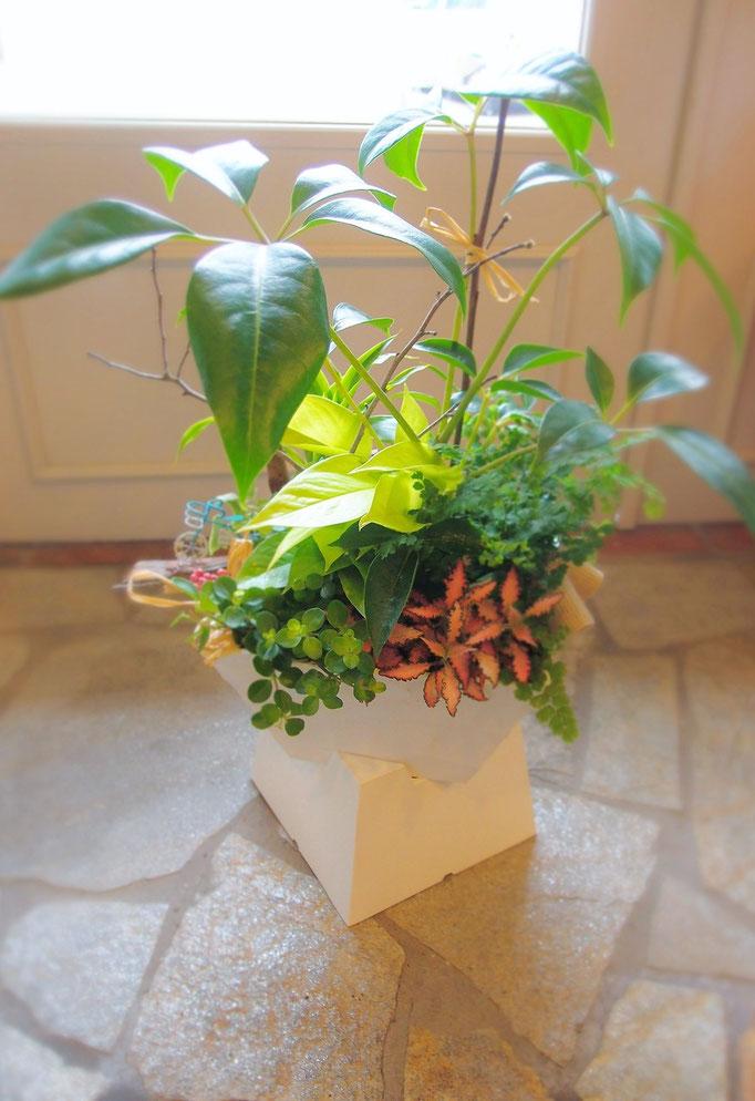 器が個性的な観葉植物の寄せ植え