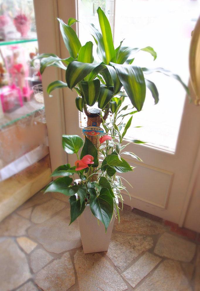 大きさもあり見栄えのする観葉植物の寄せ植え