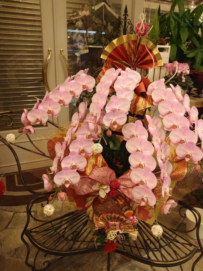 お正月仕様の5本立ち胡蝶蘭
