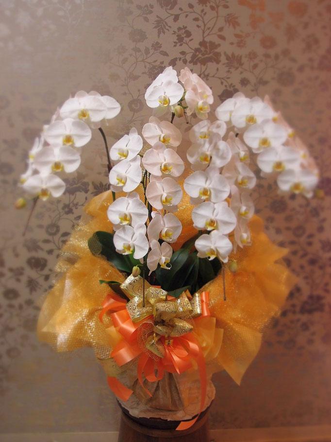 明るくラッピング 五本立ち胡蝶蘭