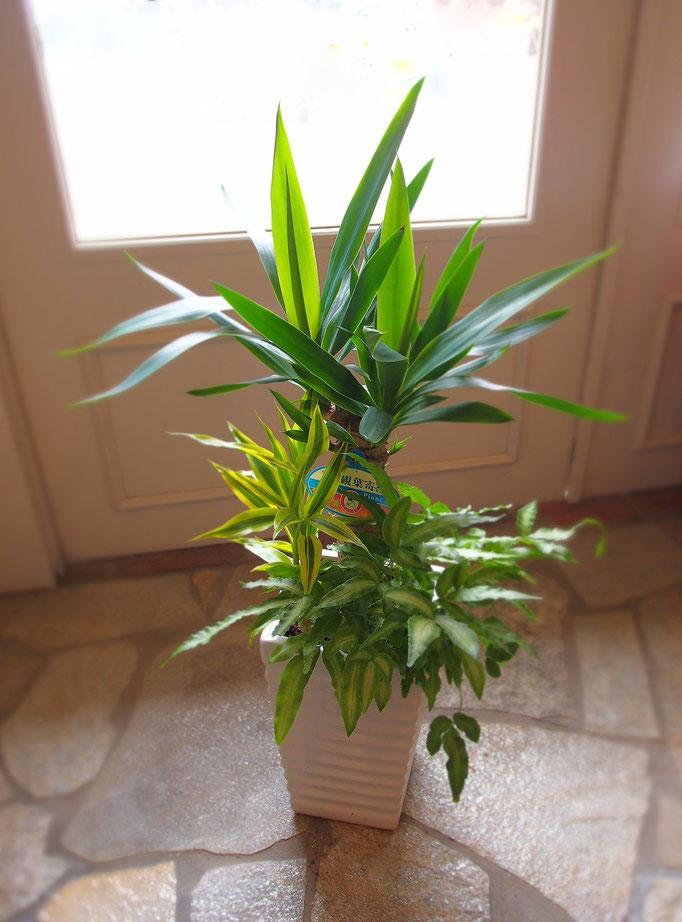 スタイリッシュな観葉植物の寄せ植え