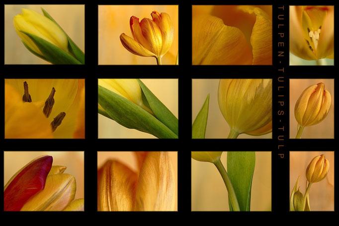 Tulpenblüte Tableau