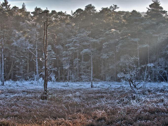 Frost im Heddeser Bent