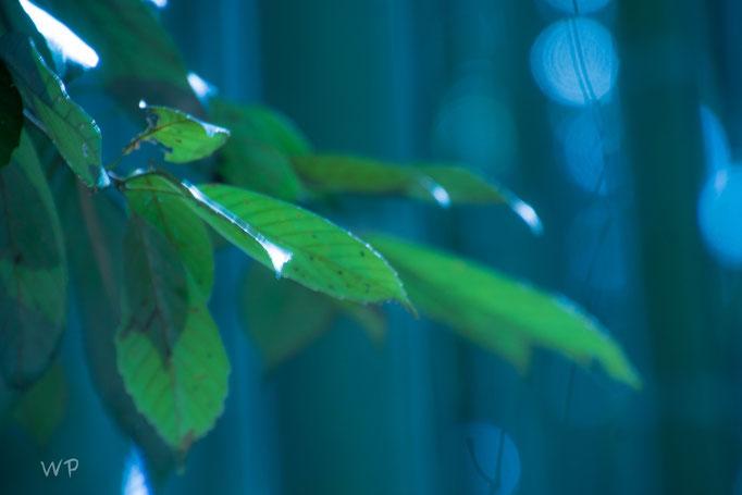 Das Blatt des Bambus