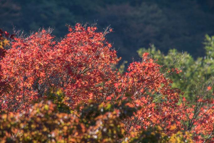 Der Herbst hat hier auch einzug...