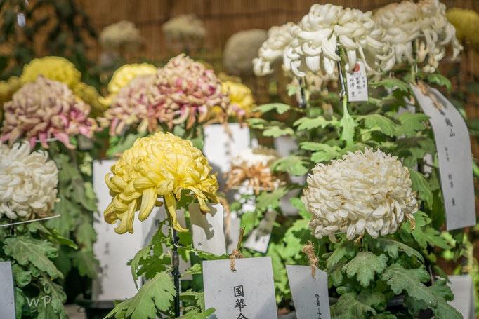 und weiteren Blumen