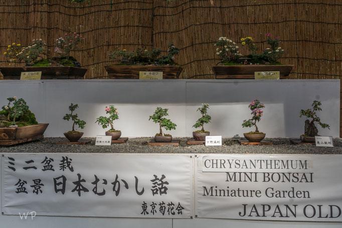 Ausstellung von Bonsai