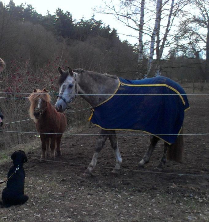 Pferdetraining Hundetraining