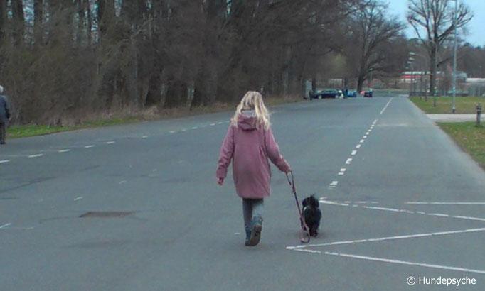 Leinenführigkeit, Laufen an lockerer Leine (Viola mit Lotti)