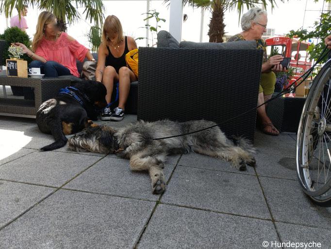 Entspannung im Hundetraining