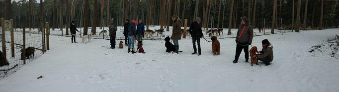 Wildpark im Winter