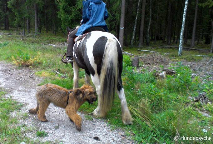 Spaziergang mit Pferd und Reiter