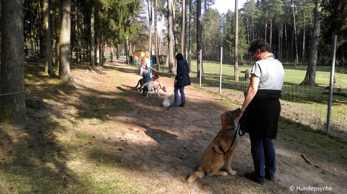 Training im Wildpark