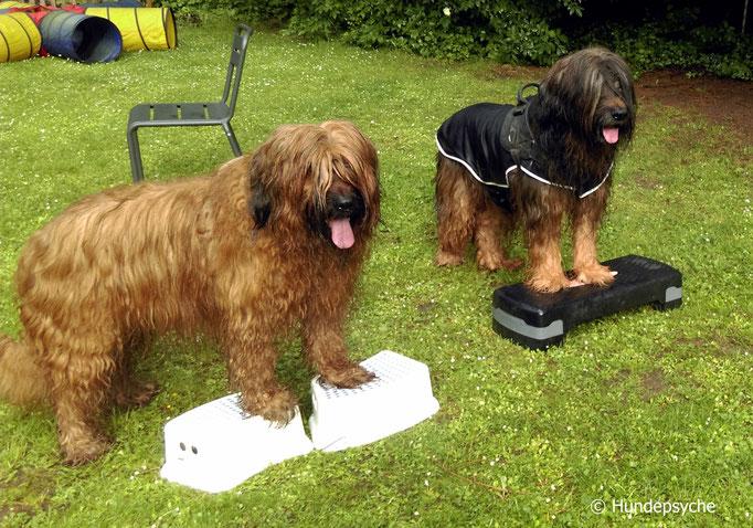 Gymnastik für Hundesenioren