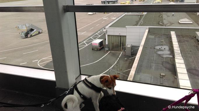 guter Ausblick aufs Rollfeld am Flughafen