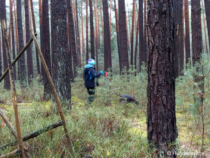 Fährte_Wald