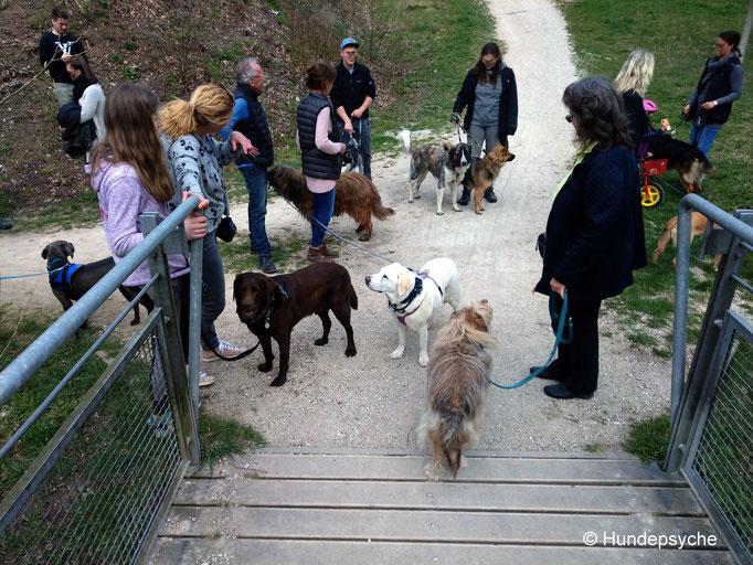 Alltagstraining mit Hunden unterschiedlicher Altersgruppen