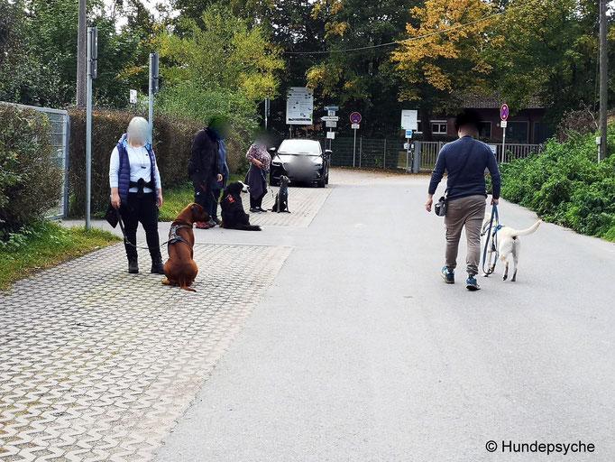 Straße_Alltagstraining