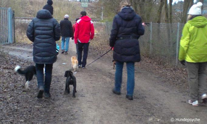 Social Walk