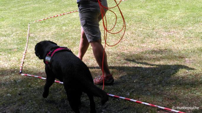 Longierarbeit - Longieren mit Hund