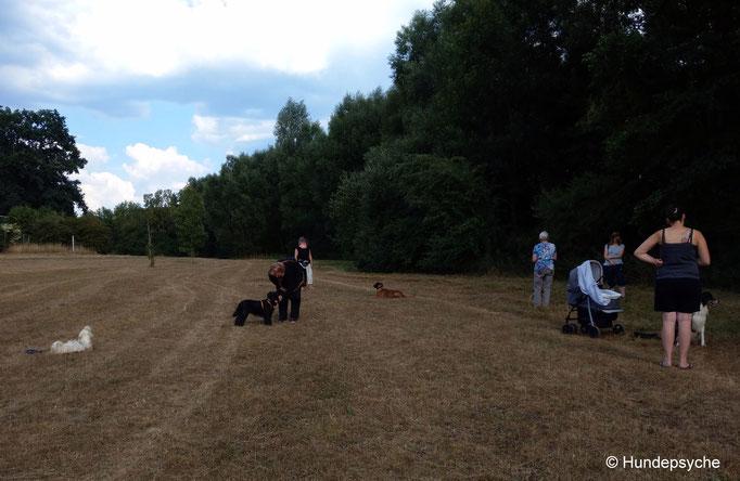 Training im Wiesengrund