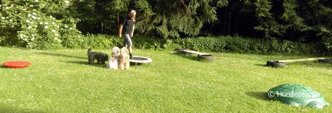 Training mit mehreren Hunden