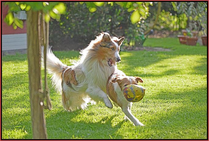 Amaretto und sein bester Freund und Hausgenosse Fritz (Itus vom rauhen Stein), zwei Ball-Junkies ;-)