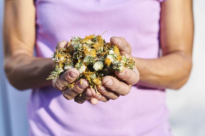 Blütenernte