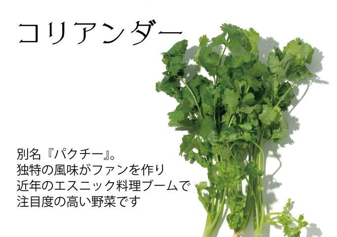 【アオベジ】コリアンダー(パクチー)