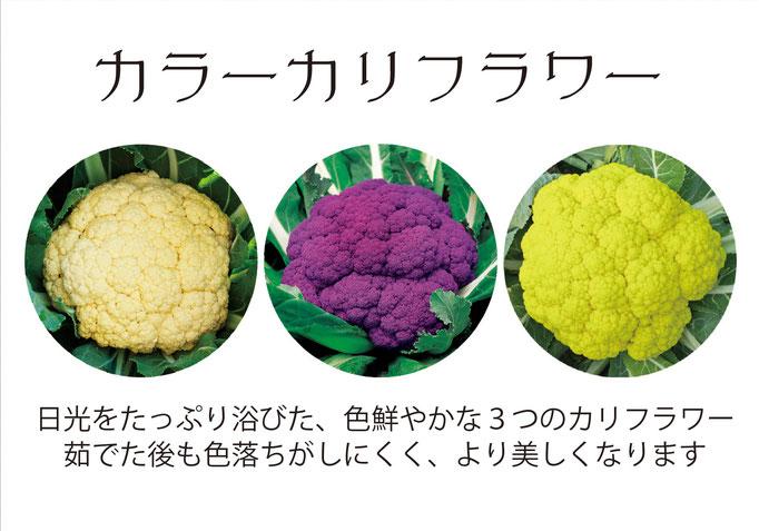 【アオベジ】カラーカリフラワー