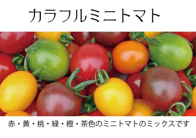 【アオベジ】カラフルミニトマト