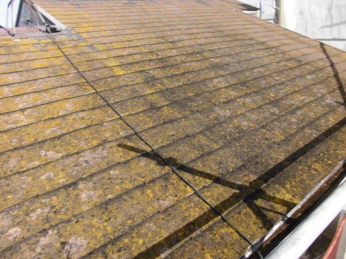 屋根/コケ、藻、汚れの付着