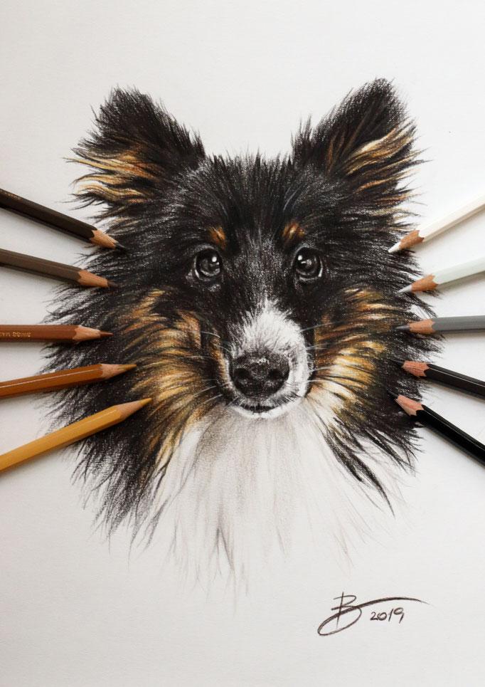 """Hund """"Luna"""" - DIN A4 - Buntstift auf Papier"""