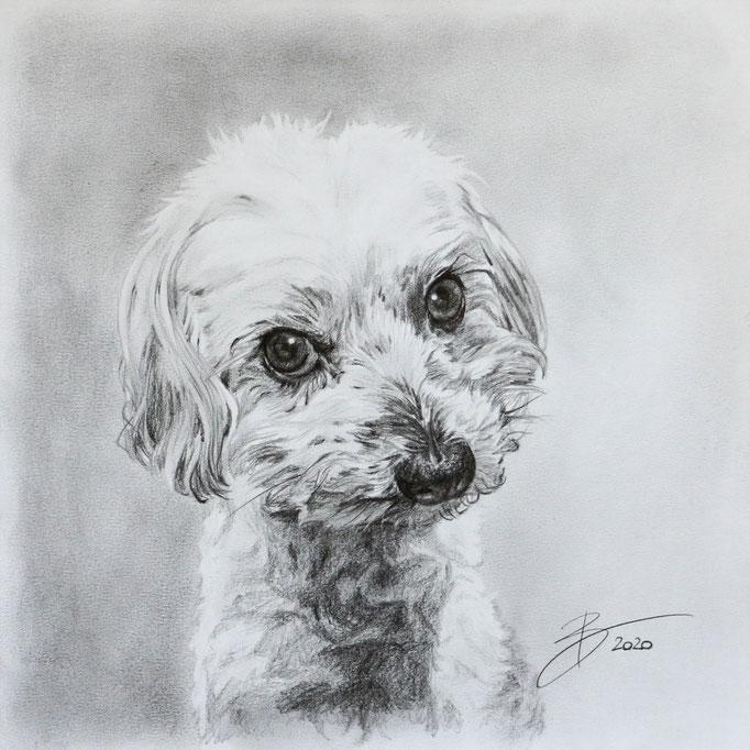 "Portrait ""Joya"" - 30x30cm - Graphitstift auf Papier"