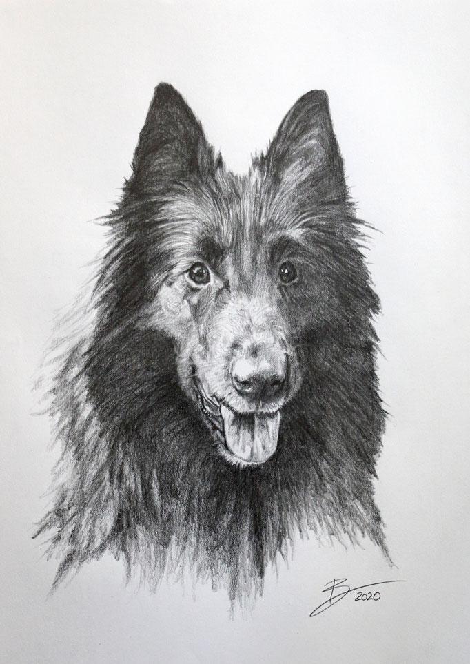 """Portrait """"Indy"""" - DIN A3 - Graphitstift auf Papier"""
