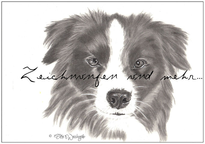 Border Collie Bleistift