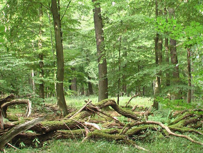 Waldrefugien