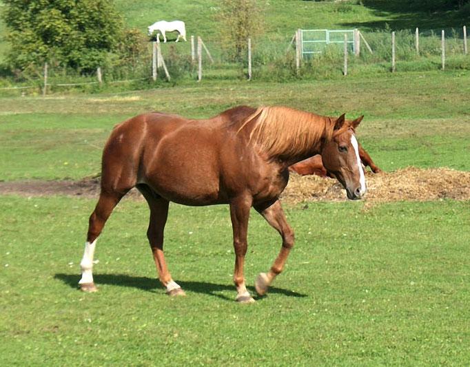 Enjambées de cheval