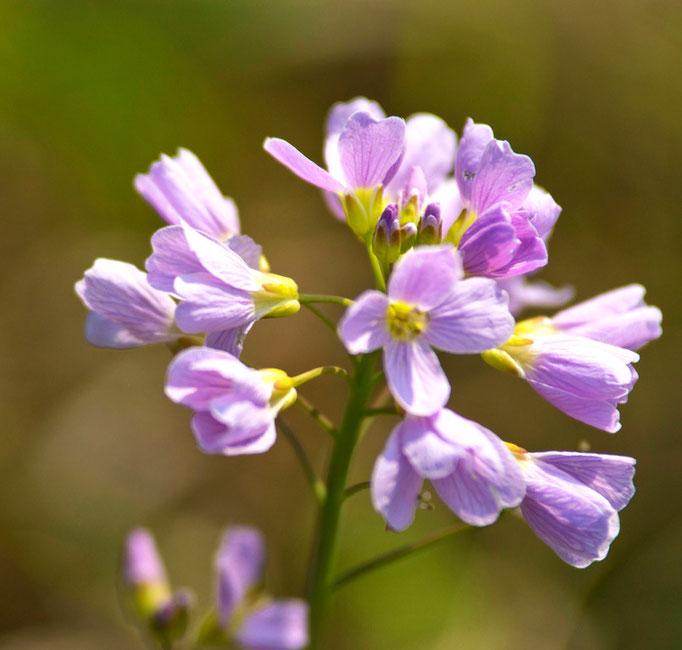 Eclosion florale, Printemps parisien