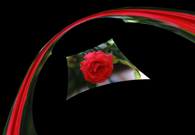 Rose rouge arc-en-ciel