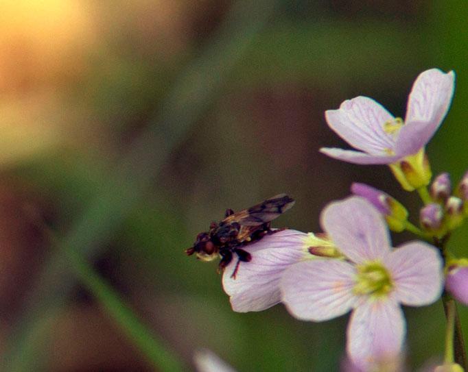 Insecte butinant une fleur