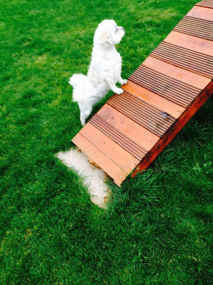 Gecko: Was denn da oben los?