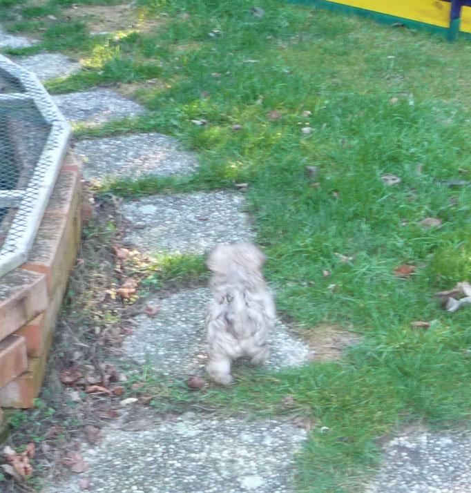 ... entdecke den Garten ... 9W