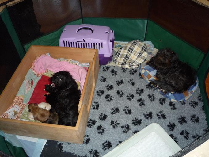 """... unser neues """"Hunde-Haus"""" ... 2W"""